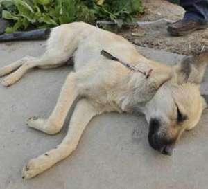 狗狗中暑的症状与急救,养宠物必要冷知识!